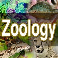 Zoologists